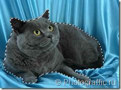 выделенный_кот