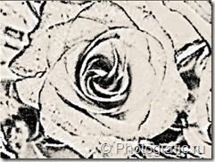рисунок_розы