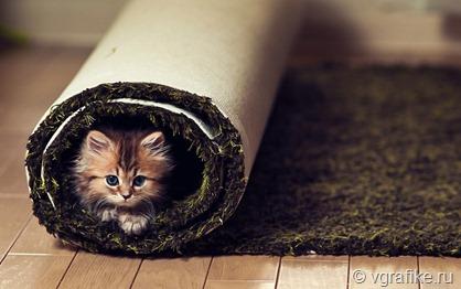 Котенок-в-ковре