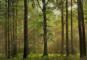 добавить лучи солнца на фото фотошоп