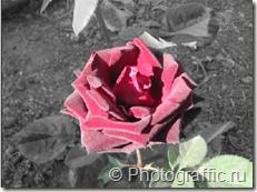 выделение цветов на фото