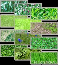 паттерны трава