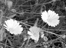 перевод в черно-белое фото
